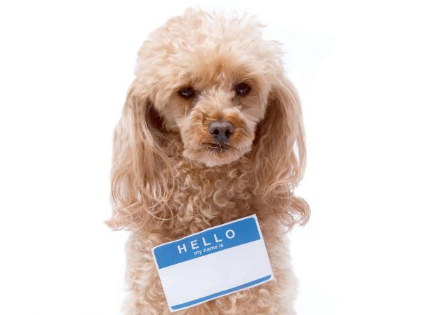 puppy dog name