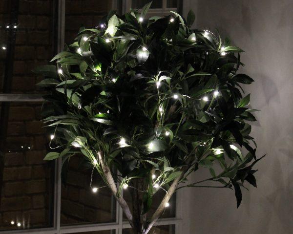 illuminated plant