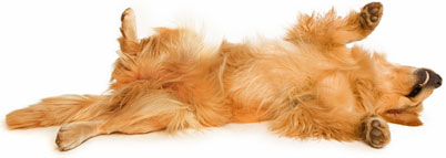 dog roll over