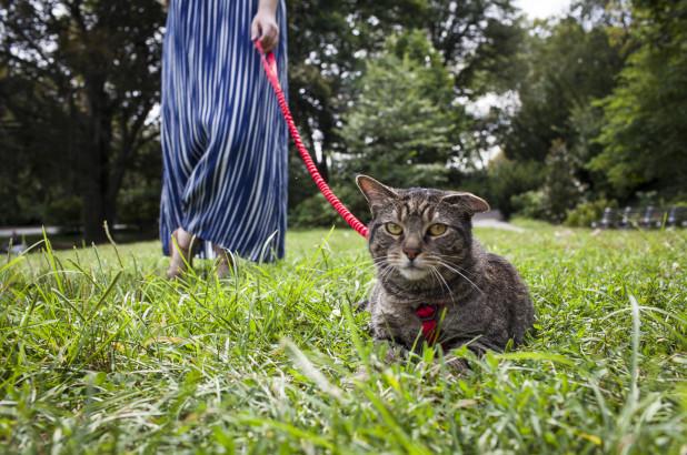 cat leashes