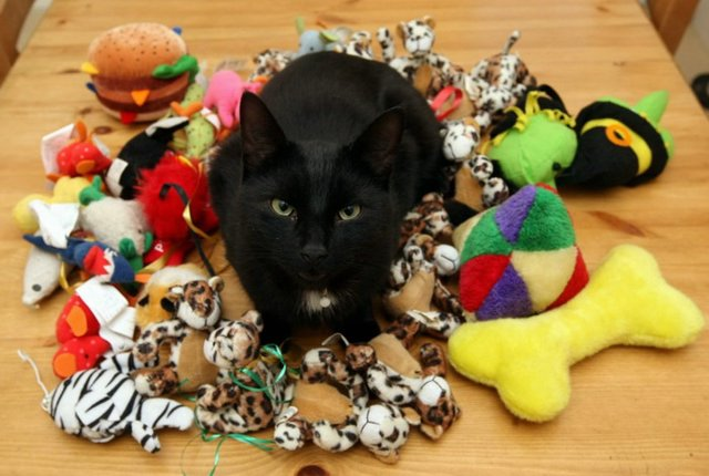 no toys for cats