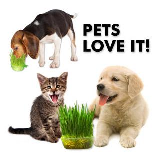 pets ans wheatgrass