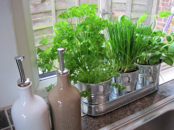 indoor herb gardening