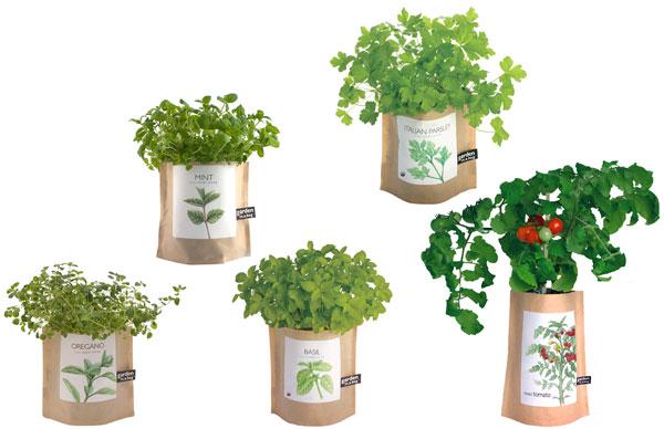 herbs plant
