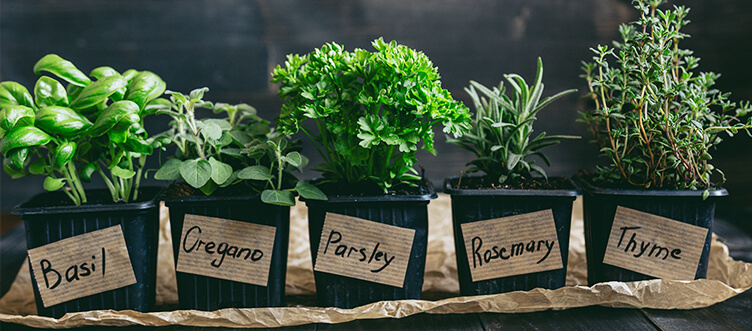 At-Home Herb Garden