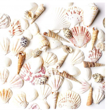 "Sea Shells Mixed Beach Seashells - Various Sizes up to 2"" Shells -Bag of Approx. 50 Seashells"