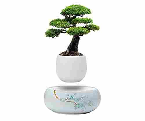 Levitating Plant Pot for Flowers Or Bonsai