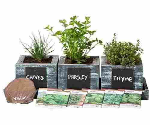Herb Garden Planter by Planter Pro's – Complete Herb Garden Kit
