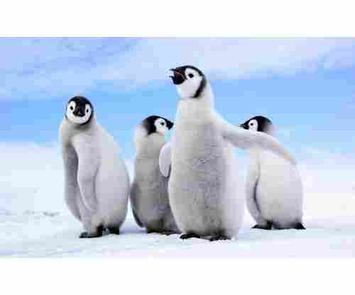 12 Penguin Gifts for People Obsessed with These Cute Animals!