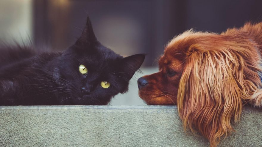 Cat&Dog Lovers: What are the Psychological Differences?