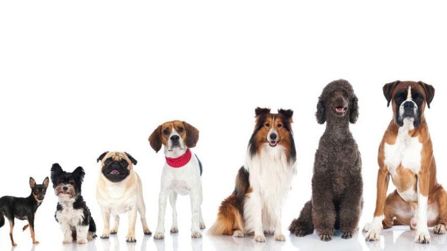 A Top 10 List of Unique Dog Names We Love!