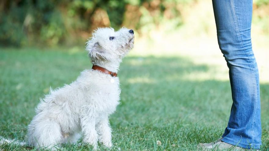 5 Easy Tricks to Teach Your Dog In No Time!