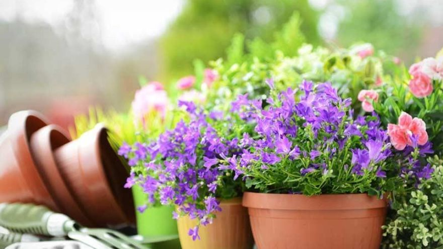 How Gardening Actually Improves Both Your Physical and Mental Health