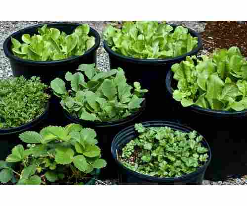 Growing Your Own Food: The Easiest Veggies & Herbs to Grow Even if You Don't Have a Garden