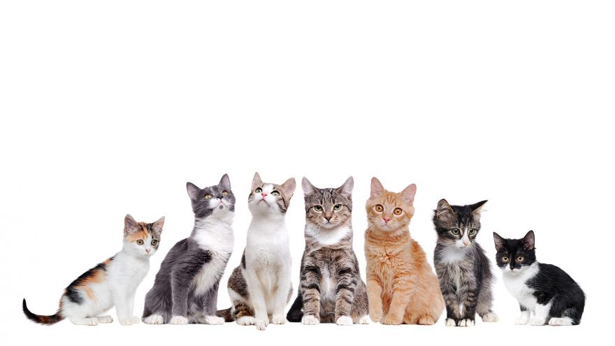 10 of the Most Original Cat Names We Came up With!