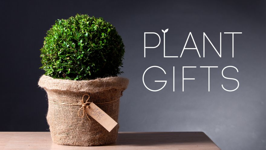 What Plants to Gift? Here is Our List for You to Choose From!