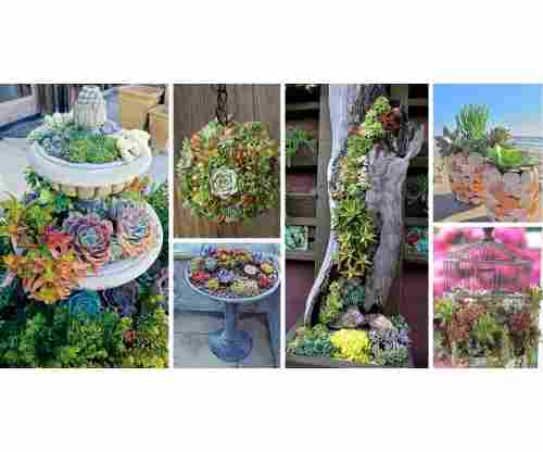 Create Your Own Succulent Garden Using Super Affordable Items