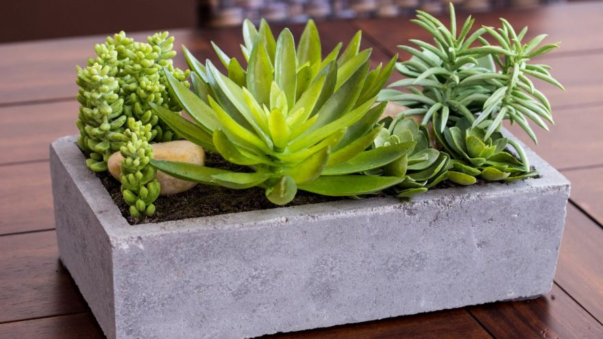 Succulent Plants: Why So Popular & How To Care For Them